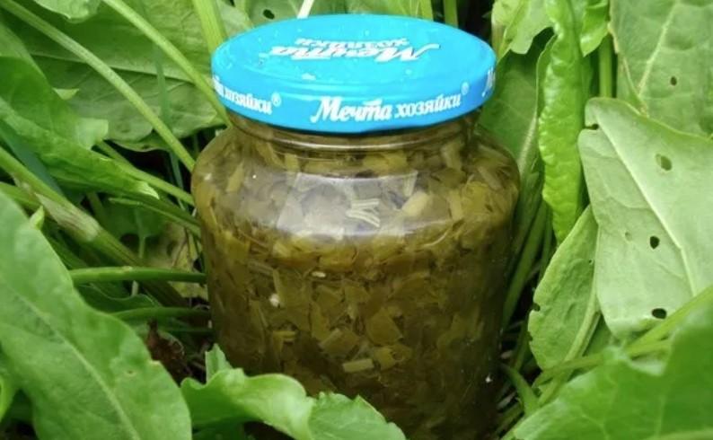 консервация щавеля без соли и стерилизации