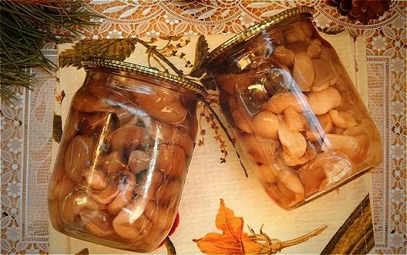 маринованные маслята на зиму - самые вкусные рецепты