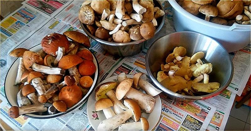 очищаем и рассортировываем грибы